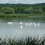Marcenay le Lac et sa faune